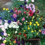 Моята английска градина