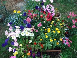 градски цветя