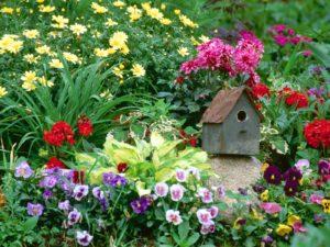 Потддръжка на градина