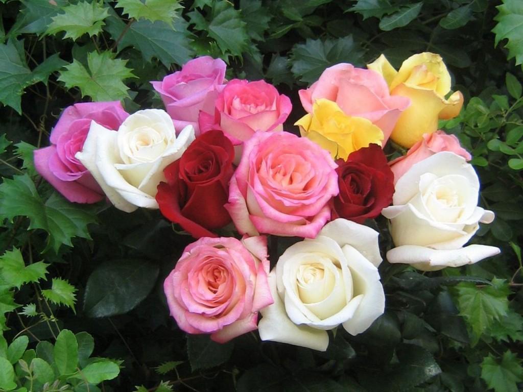 грижа за розите